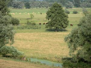 Landscapes of Picardy - Bocage of Thiérache: meadows and trees