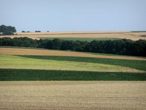 Landscapes of Picardy - Series of fields