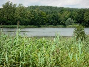 Landscapes of Picardy - Lake, reeds and Saint-Gobain forest