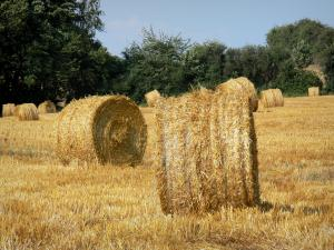 Landscapes of Picardy - Straw bales in a field