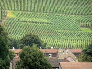 Landscapes of Picardy - Roofs of houses and vine fields of the Champagne vineyards