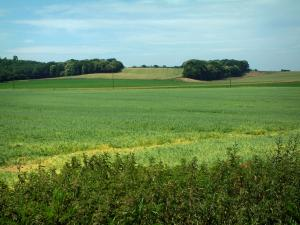 Landscapes of Picardy - Plants, fields and forests in background