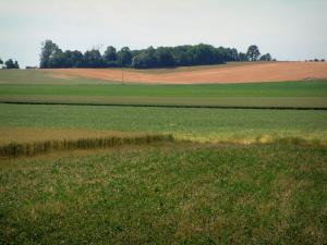 Landscapes of Picardy - Fields and forest in background