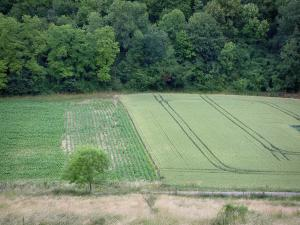 Landscapes of Picardy - View of the harvest fields and trees of a forest