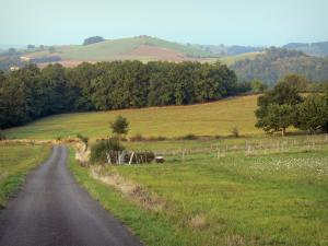 Landscapes of the Puy-de-Dôme - Small road lined with meadows and trees