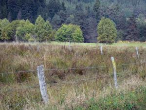 Landscapes of the Puy-de-Dôme - Livradois-Forez Regional Nature Park: Fence of a field, trees and forest of pine trees