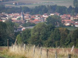 Landscapes of the Puy-de-Dôme - Fence of a field, trees and village