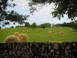 Landscapes of the Quercy - Branches of trees, low stone wall and field with straw bales