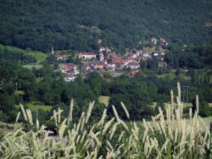 Landscapes of the Quercy - Ears in foreground with view of the houses of a village, trees and forest