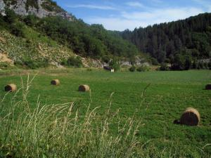 Landscapes of the Quercy - High vegetation in foreground, field with straw bales and forest