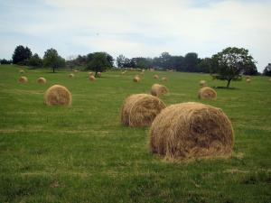 Landscapes of the Quercy - Straw bales in a field and trees in background