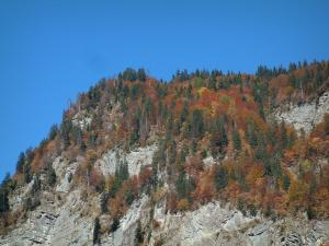 Landscapes of the Savoie in automn - Mountain with trees in autumn