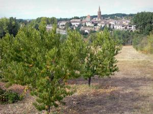 Landscapes of the Tarn-et-Garonne - Orchard in foreground overlooking the village of Montricoux