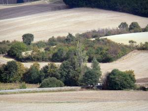 Landscapes of the Tarn-et-Garonne - Trees among fields
