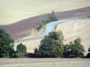 Landscapes of the Tarn-et-Garonne - Small country road surrounded by fields