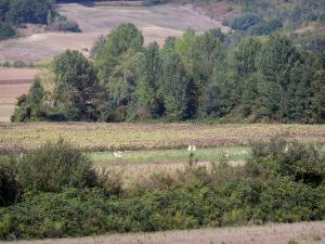 Landscapes of the Tarn-et-Garonne - Wood surrounded by fields