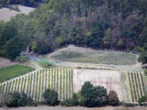 Landscapes of the Tarn-et-Garonne - Vineyards and trees