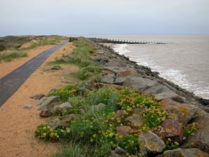 Landscapes of the Vendée - Nature reserve of the Aiguillon bay: breakwater of the Aiguillon dike, vegetation, grassland and the sea