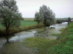 Landscapes of the Vendée - Poitou marshes: canal, trees along the water and the meadows