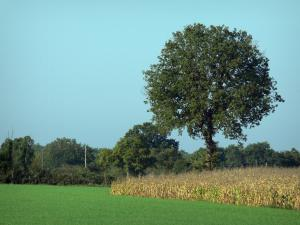Landscapes of the Vienne - Trees, corn field and green grass