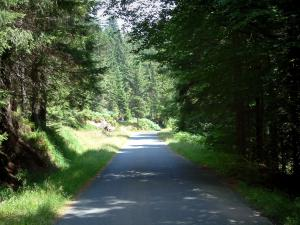 Landscapes of the Vosges - Road in a forest of Vosges