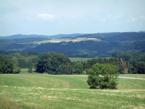 Landscapes of the Vosges - Pastures, trees and forests