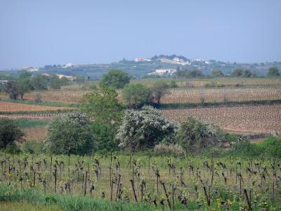 Languedoc vineyards