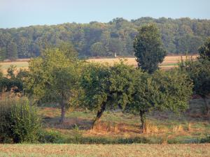 Lanscapes of the inland Brittany - Fields, trees and forest