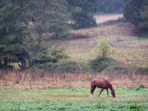 Lanscapes of the inland Brittany - Horse in a meadow, trees