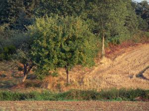 Lanscapes of the inland Brittany - Trees and fields