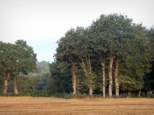 Lanscapes of the inland Brittany - Field and trees