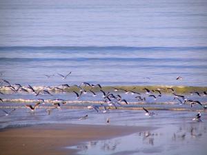 Lanscapes of Normandy - Beach, sea birds flying and the Channel (sea)