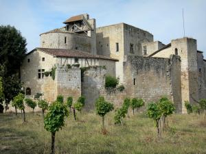 Larressingle - Fortified Romanesque church, keep-castle, houses and ramparts (fortifications) of the medieval village, vines in the foreground