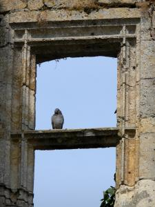 Larressingle - Pigeon sitting on a window border of the the keep-castle