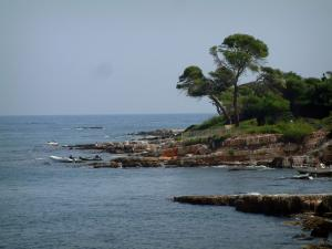 Lérins island - Sainte-Marguerite island: cliffs, pine trees and sea