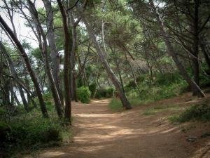 Lérins island - Sainte-Marguerite island: road (footpath) in the pine forest