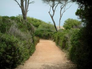 Lérins island - Sainte-Marguerite island: road (footpath) lined with Mediterranean vegetation