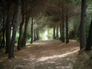 Lérins island - Sainte-Marguerite island: road (footpaths) in the forest