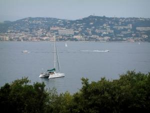 Lérins island - Sainte-Marguerite island: trees on the island in foreground with view of the sea, boats and the coast of the French Riviera