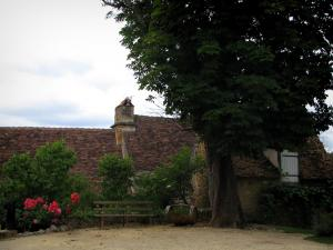 Limeuil - Tree, bench, shrubs and houses of the medieval village, in Périgord