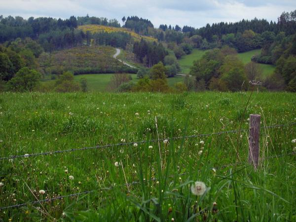 Limousin landscapes - Field of wild flowers, prairies and trees