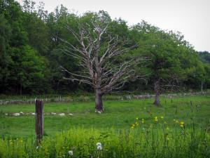 Limousin landscapes - Wild flowers, prairie and trees