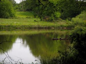 Limousin landscapes - Pond, shrubs and prairie dotted with wild flowers