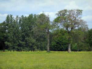 Limousin landscapes - Field of wild flowers and trees