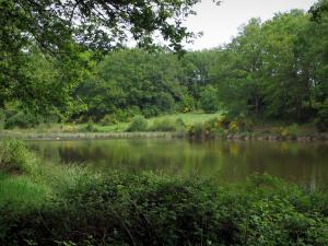 Limousin landscapes - Pond surrounded by trees and shrubs