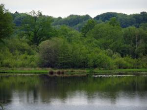 Limousin landscapes - Lake, trees and forest