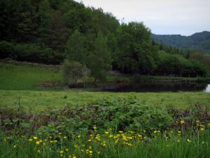 Limousin landscapes - Wild flowers in foreground, prairie, pond, trees and forest
