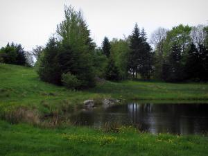 Limousin landscapes - Meadow dotted with wild flowers, pond and trees