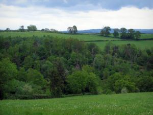 Limousin landscapes - Meadows, trees and clouds in the sky