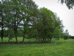 Limousin landscapes - Meadow dotted with wild flowers and trees